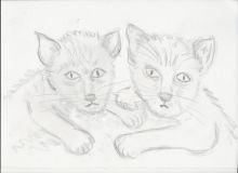 2020-06-05-Zwei-Katzen