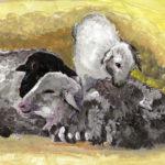 2019-01-28Zwei-Große-und-ein-kleines-Schaf